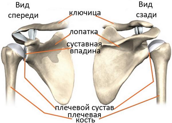 отжимания на плечи