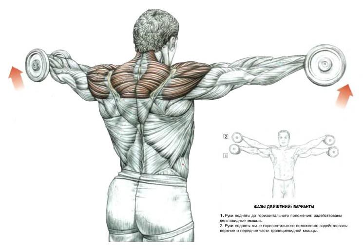 гантели упражнения в домашних плечи