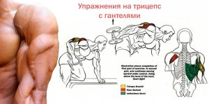 упражнения для трицепса с гантелями для мужчин