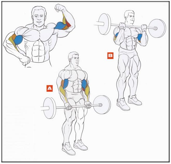 Как накачать руки и ноги