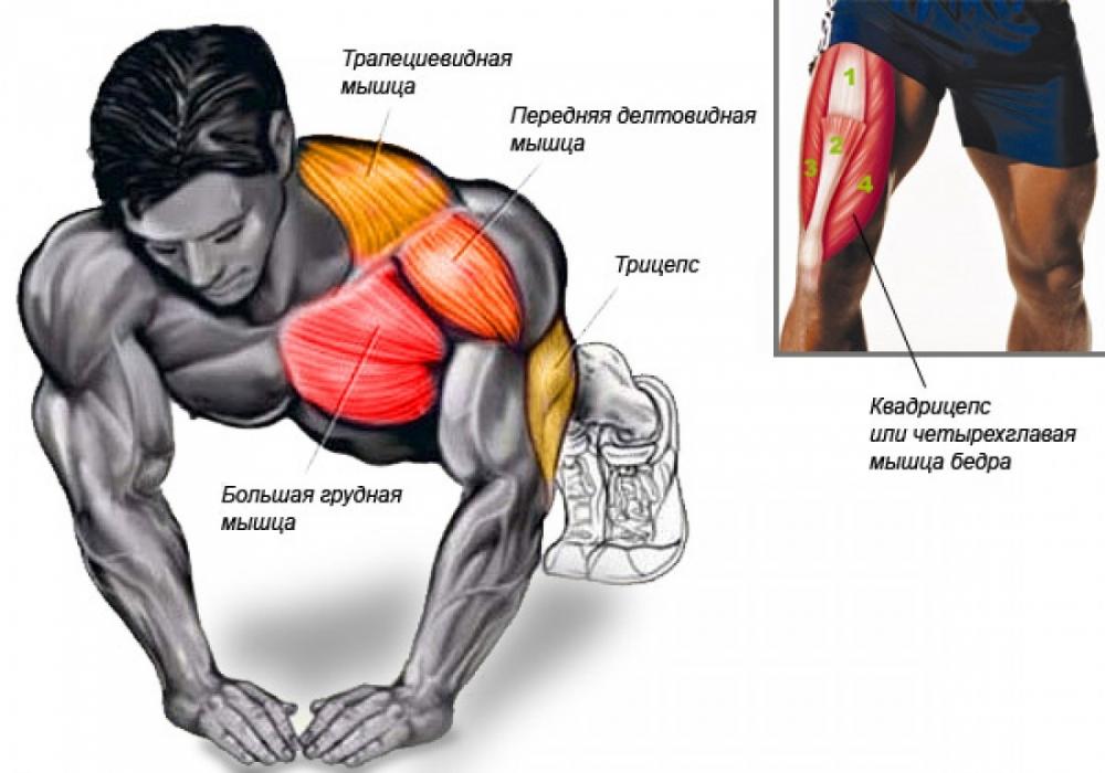 Как накачать мышцы рук за месяц