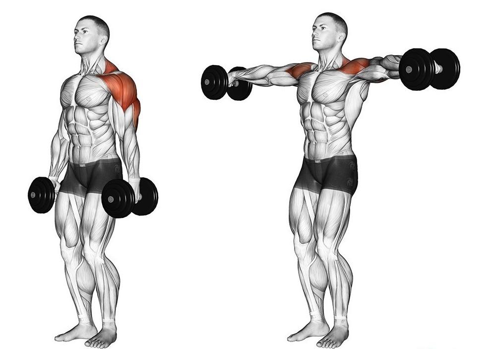какими упражнениями можно накачать плечи