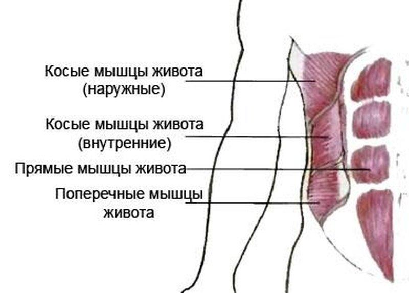 накачать боковые мышцы пресса девушке