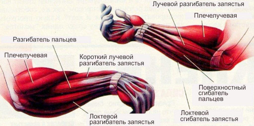 Как накачать предплечье гирей