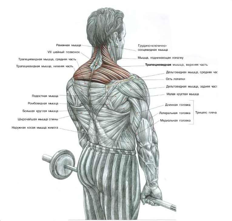 Упражнения для мышц трапеции