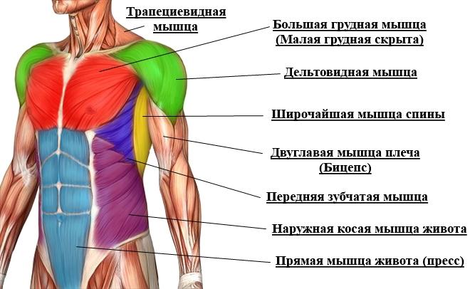 Упражнения на грудные на турнике