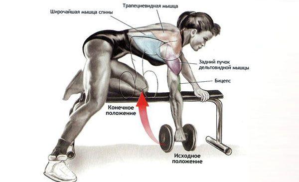 Упражнения на спину с гантелями для мужчин и женщин