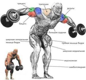 Как накачать заднюю часть плеча