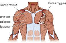 Как накачать верх груди в домашних условиях