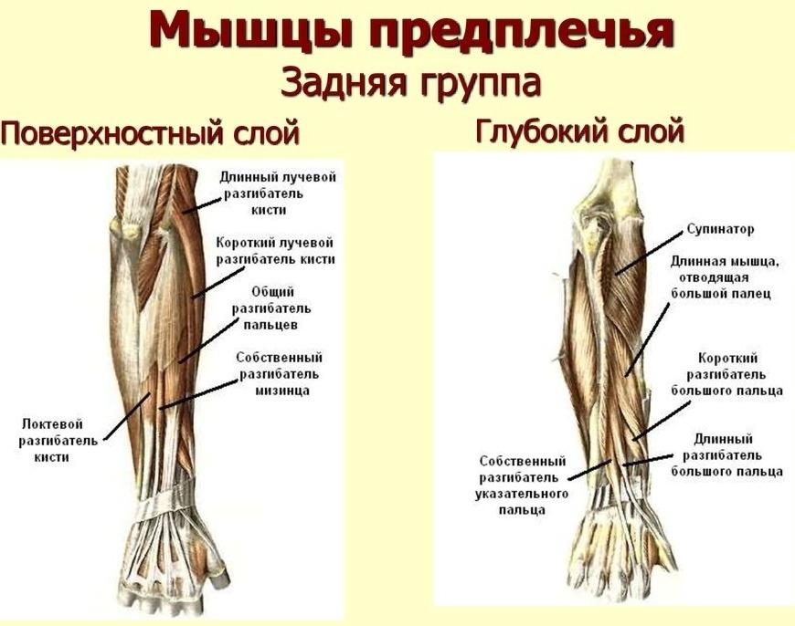 как накачать кисти рук эспандером