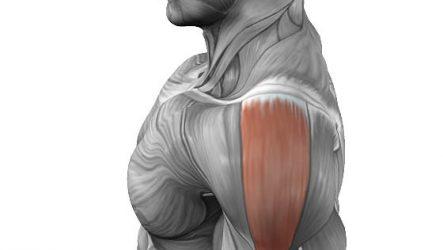 Упражнения на среднюю дельту плеча