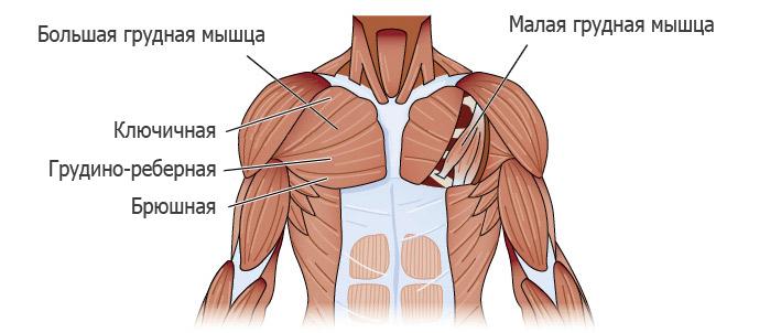 верхняя часть грудных мышц упражнения дома