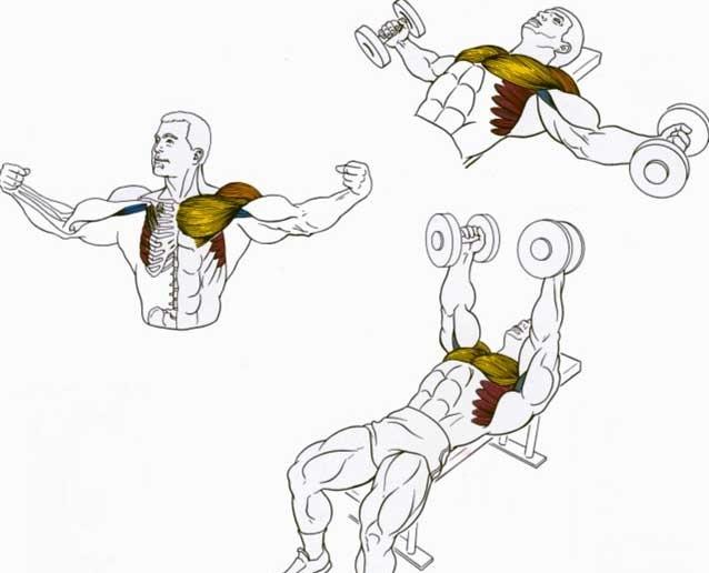 Как накачать грудь и трицепс