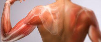 Почему после тренировки болят мышцы через день